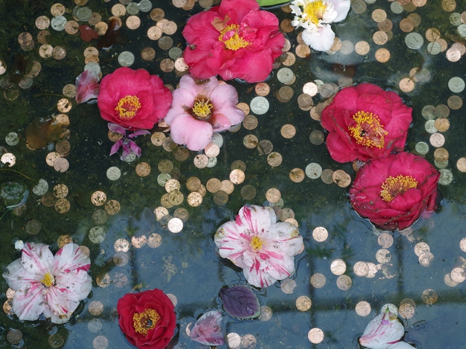 Camellias and Coins
