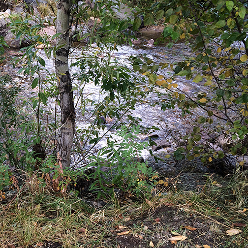 Fall River, Estes Park. In Southern Illinois we would call this a creek.