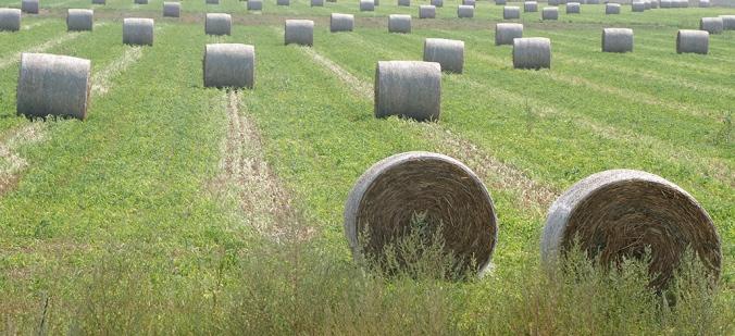 Hay bales, northwest Kansas