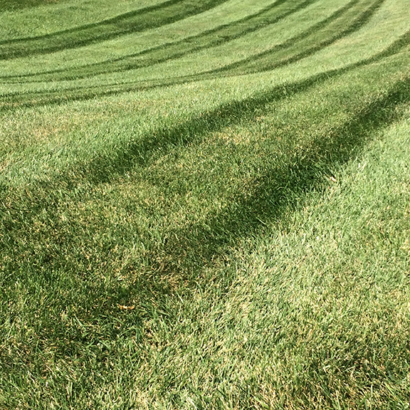 Lawn outside Kemper Museum of Contemporary Art