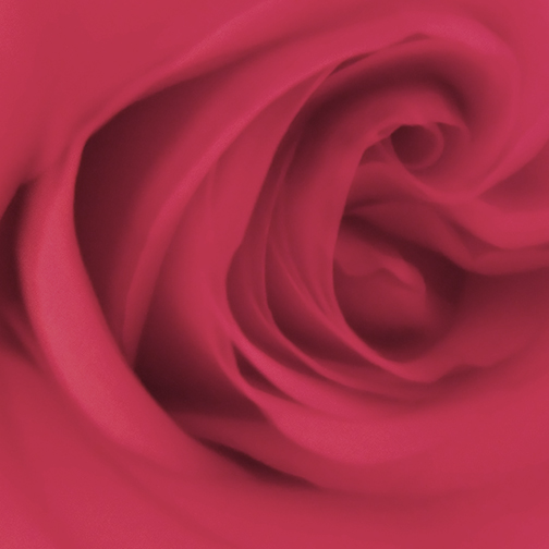 rose-cropped-0809