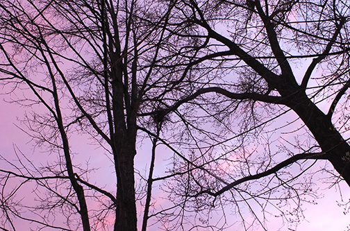 sunset-and-trees-1090