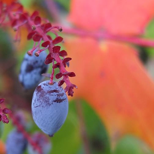 berries-1480