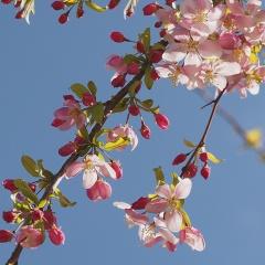 Fruit-tree-P4020120