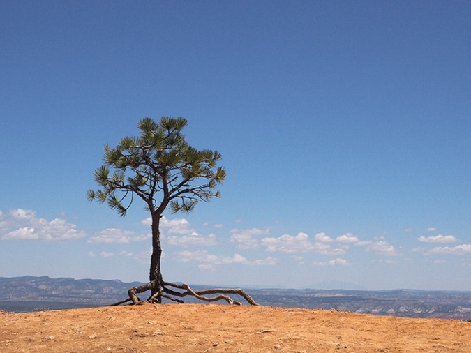 Bryce-lone-tree