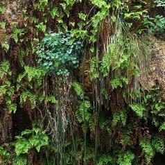 Hanging gardens, Riverside Walk