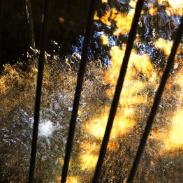 Koi pond abstract