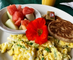A nasturtium was served with breakfast at the Regis Café in Red Lodge, Montana