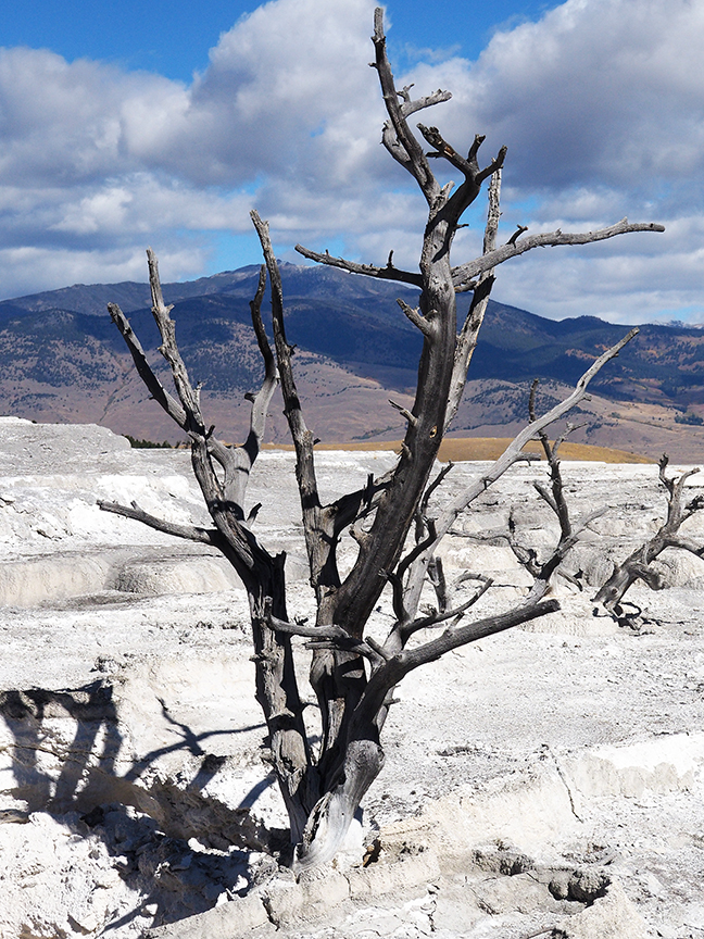 Dead tree and dead spring
