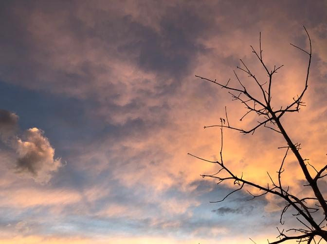 Skeleton sky