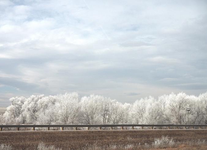 Trees along I-25